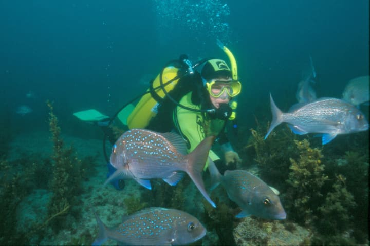 Goat Island is a great place to snorkel or dive amongst the fishes, straight off the beach. Jenny diving with the snapper at Goat Island.