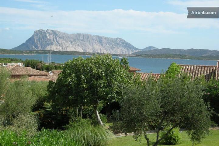 Appartamento in Sardegna - Olbia-Tempio - Apartamento