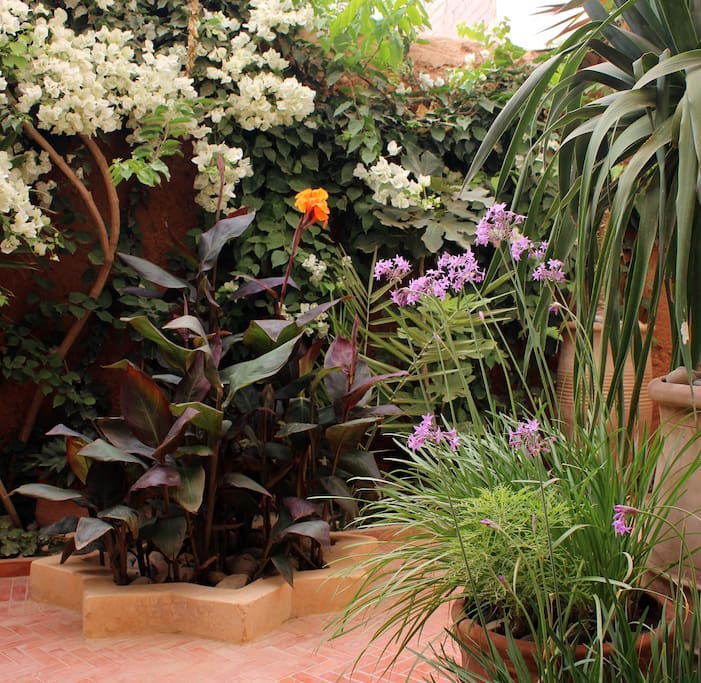 Exotic flowers in the garden