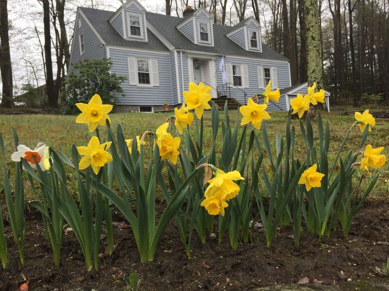 Street view of the house with Daffodils in bloom.