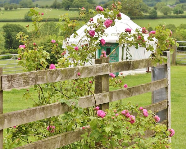 Yurt Carianne ~ glamping on the Welsh border