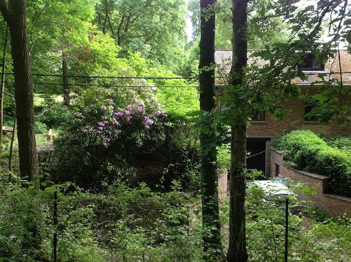 Maison de plein pied avec jardin