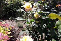 le jardin l 'été