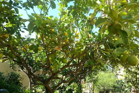 Casa Vacanza Lemon Tree - Custonaci