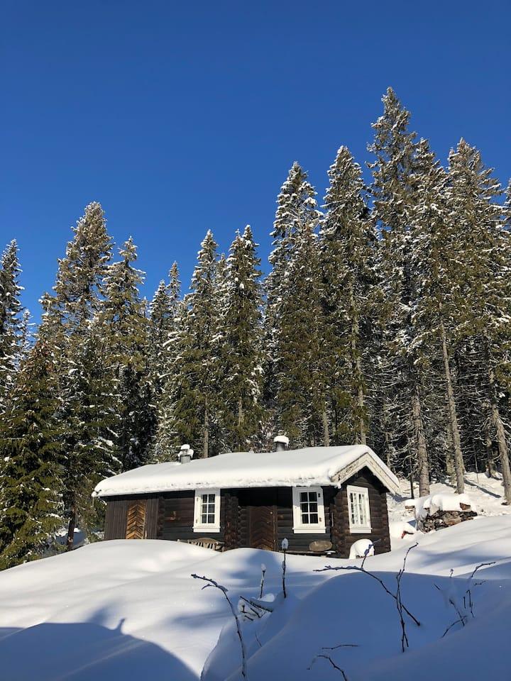 Forrest cabin, Mariplassen