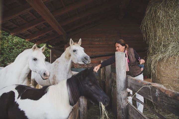 CATERINA AND HER HORSES