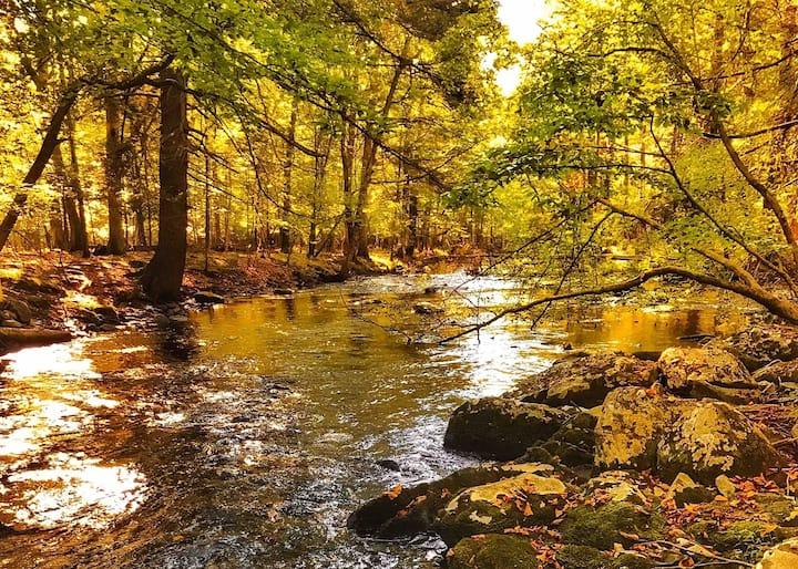 Plan a Foliage Voyage: Creek, Fireplace/Fire pit++