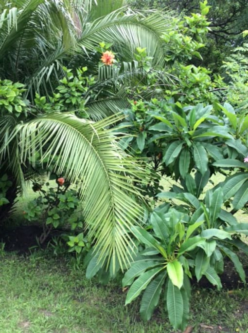 all gardens display lush vegetation and tastefully landscaped areas all done by Owner kelvin Chelemu