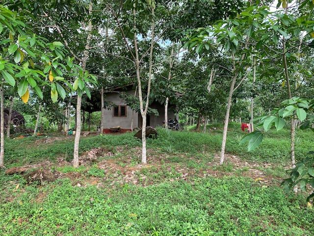 Tea farmers house