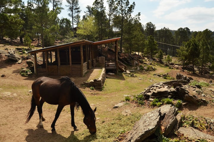 Cabaña Las Picazas Loft, bosque y río de ensueños