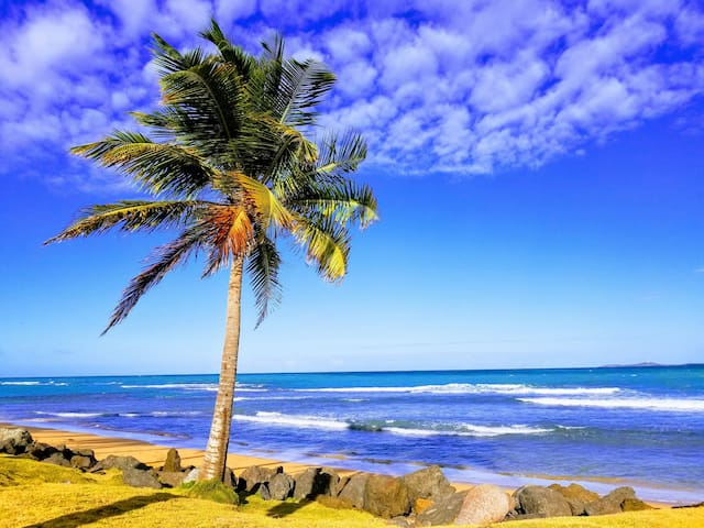 The Tropical Hideout  1-BR Apt (walking distance)