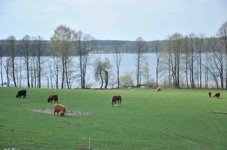 Hailendų veislininkystės ūkis