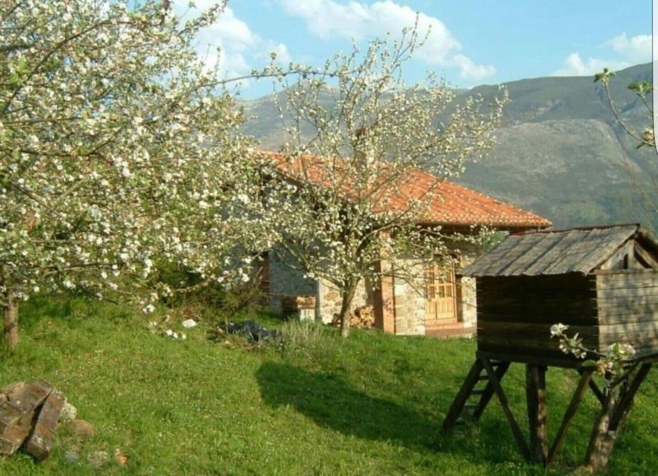 Casa rural cerca de llanes playa y monta a casas de - Hoteles cerca casa campo madrid ...