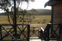 View from the verandah with horses grazing in the valley