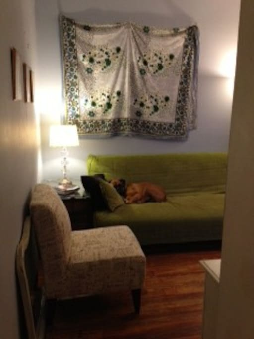 Living Room and Pooch