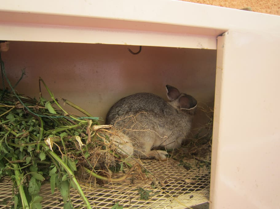 We also have Rabbits and other poultry.
