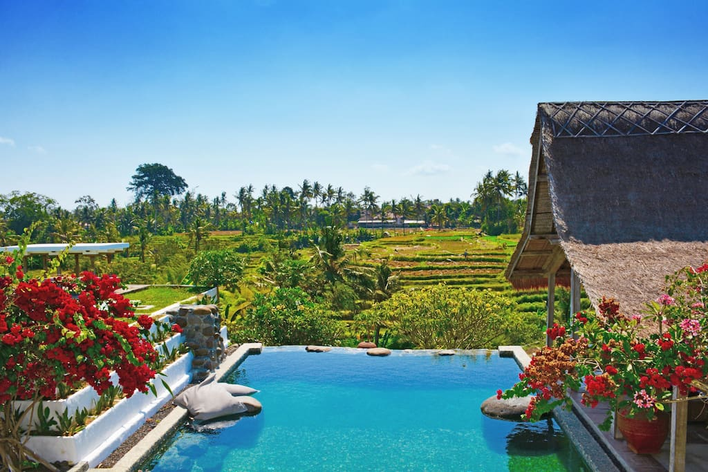 Pool overlooking rice fields