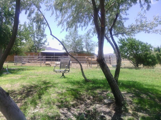 Natures vegetarian bnb and massage - Silver Springs - Bed & Breakfast