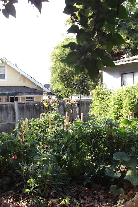 Backyard garden in front of suite's privacy fence