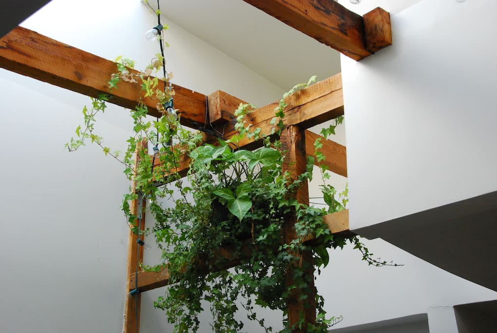 Skylight and ivy plant