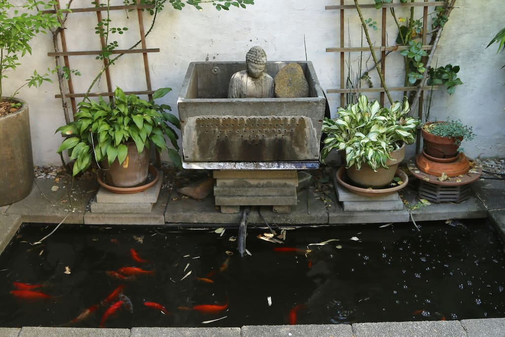 The Serene Goldfish Pond