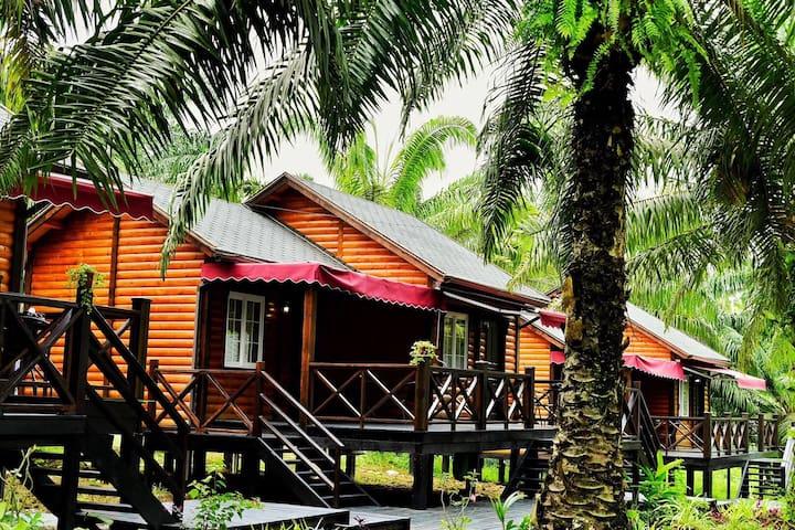 仙本那棕榈林联排小木屋
