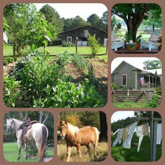 Around the farm. Simple living.