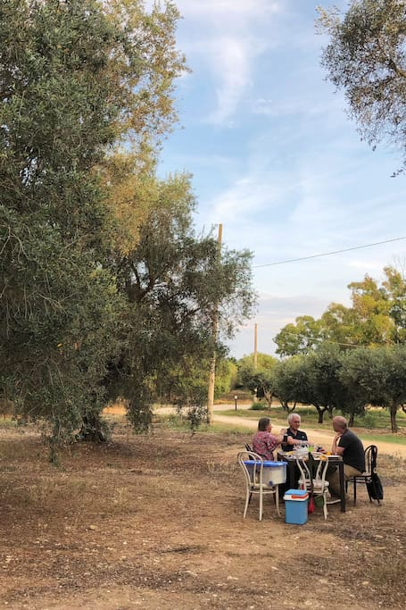 Olive oil tasting under an ancient tree