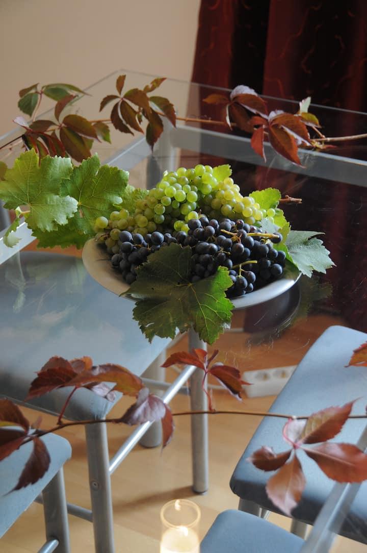 In Mitten der Weingärten  * vineyard-apartment
