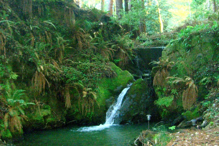 REDWOOD STE - Paradise by the creek - Gualala - Flat