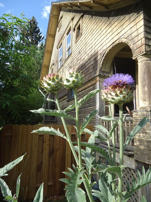 Artichokes greet you upon arrival (note: this is our house before the paint job)