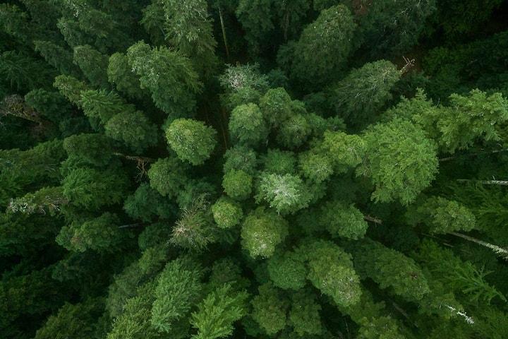 Chesterman Hideaway - Rainforest Suite
