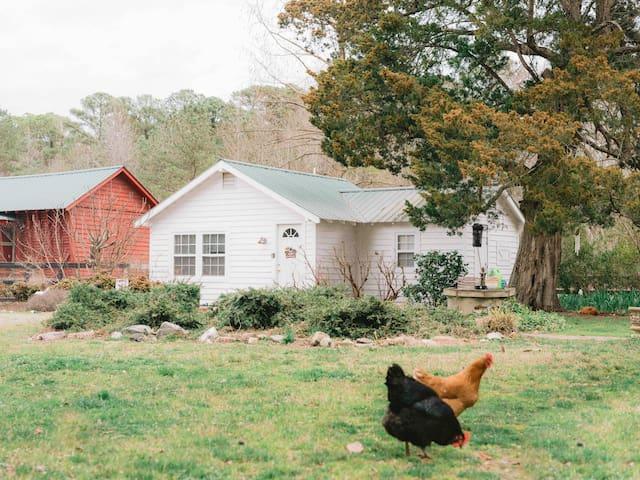 Cottonwood Estate - Farmhouse w/ mini goats & pony