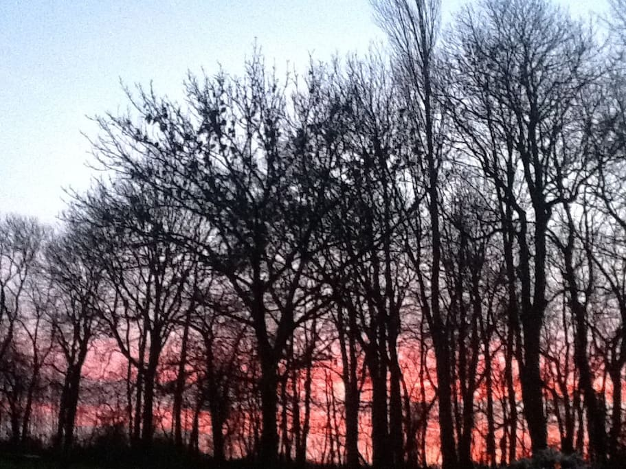 Garden view at sunrise time into the forest December 20th 2015.