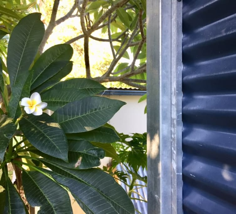 Frangipani trees create a tropical feel in the outdoors and around the outdoor shower room