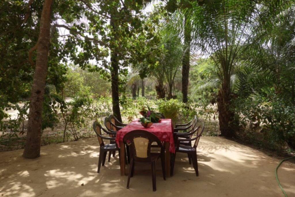 Table de jardin à l'ombre des Palmiers