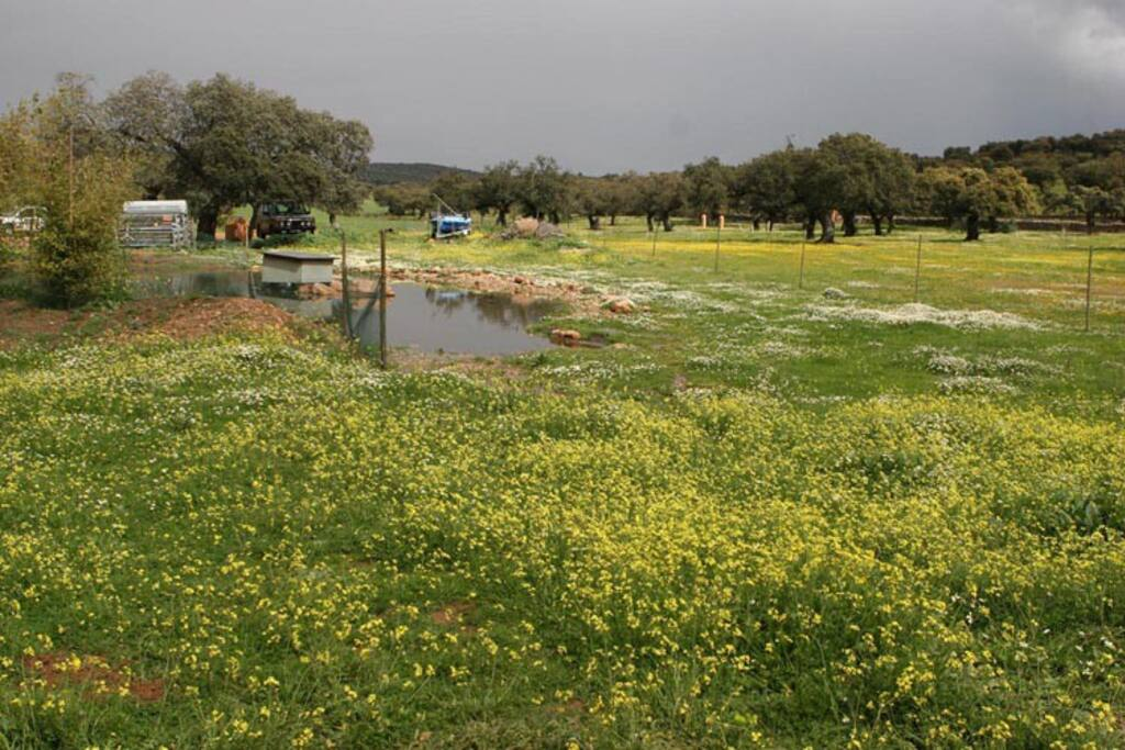 El esplendor del Chozo en primavera