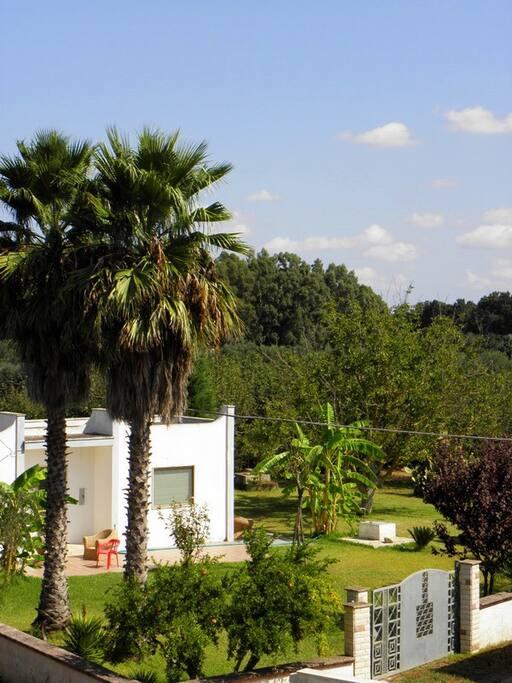 Ampio giardino esterno, intorno verde e alberi da frutta
