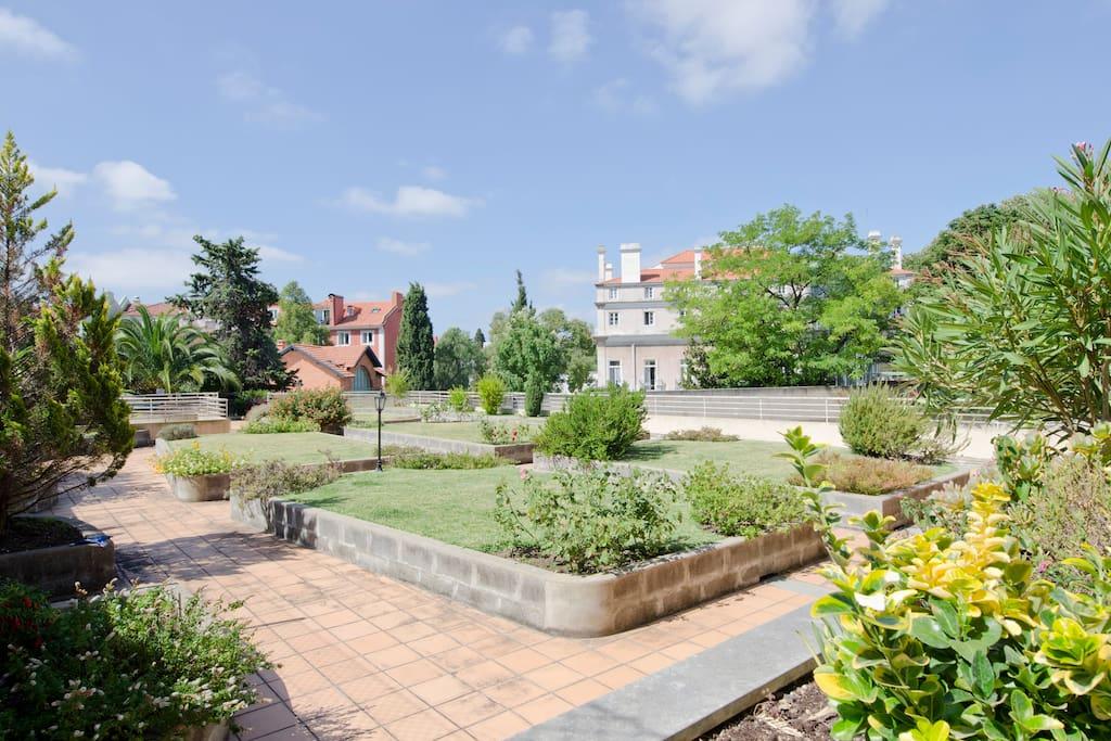 Garden / Jardin