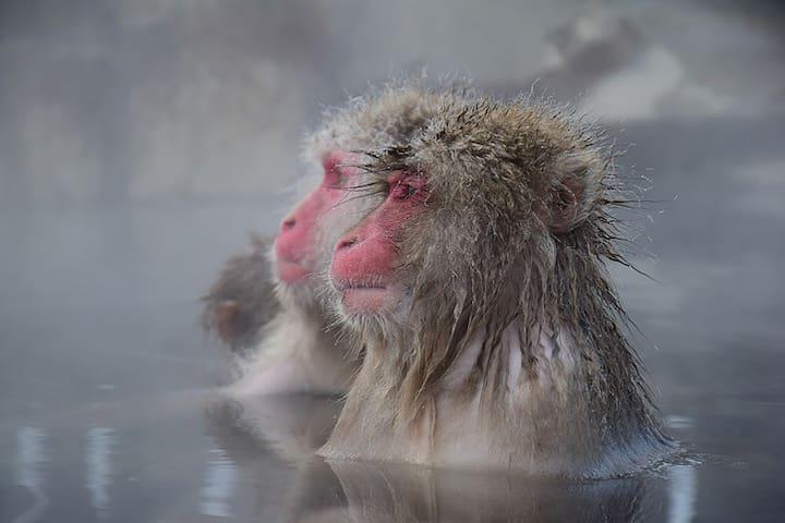 【Booking.com9.2! private open-air bath 】Daymaruya