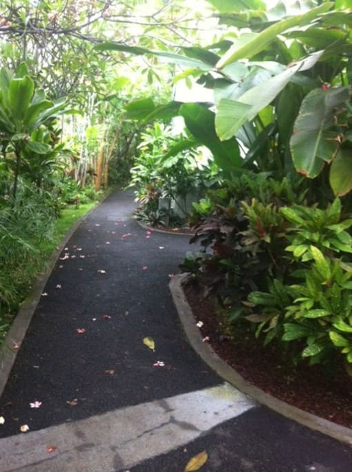 Walk way to Alii Drive  on  the property