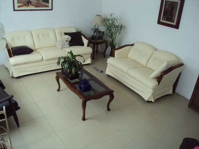 Sofa confortable clean and cheap