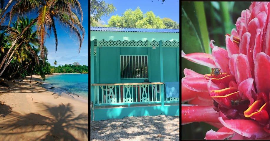 Beachfront Bliss In Punta Uva