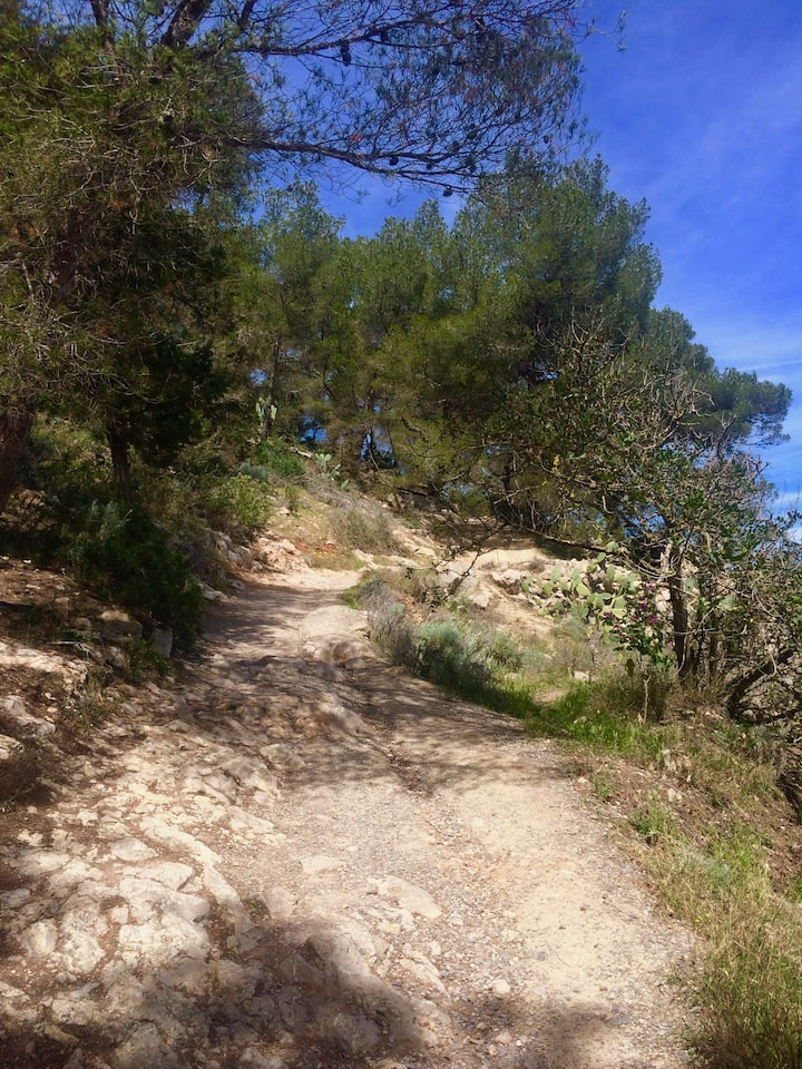 Conscious walk in nature