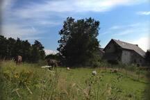 Blick von den Weiden zur Gartenseite