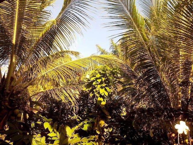 CASA DA PAZ  - ILHA DE BOIPEBA - Ilha de Boipeba - Ev