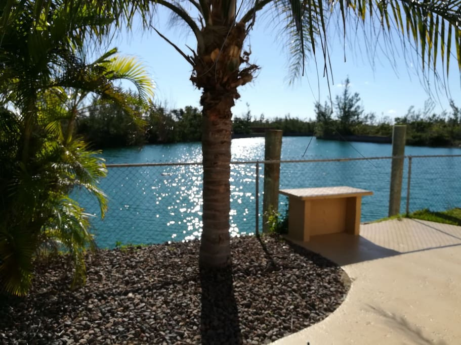 Enjoy the view from patio. Sea turtles, sting rays and an assortment of fish are frequently spotted in the canal. Across the canal is a small mangrove where fish can been seen splashing around.