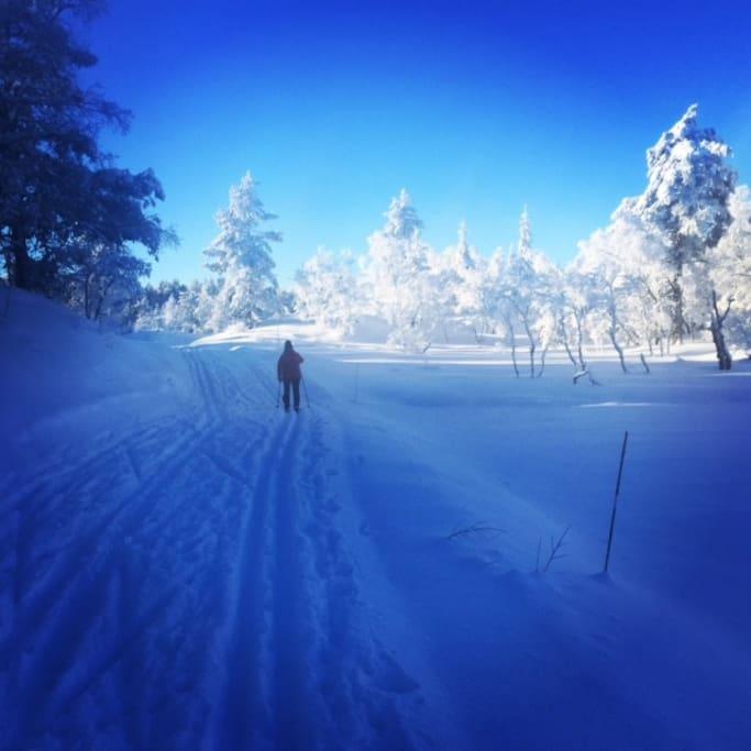 "Flotte skiløyper rundt ""Høna"" på Gautestad."