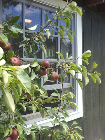 Beautiful Private Cottage in yard - Berkeley - Cabaña
