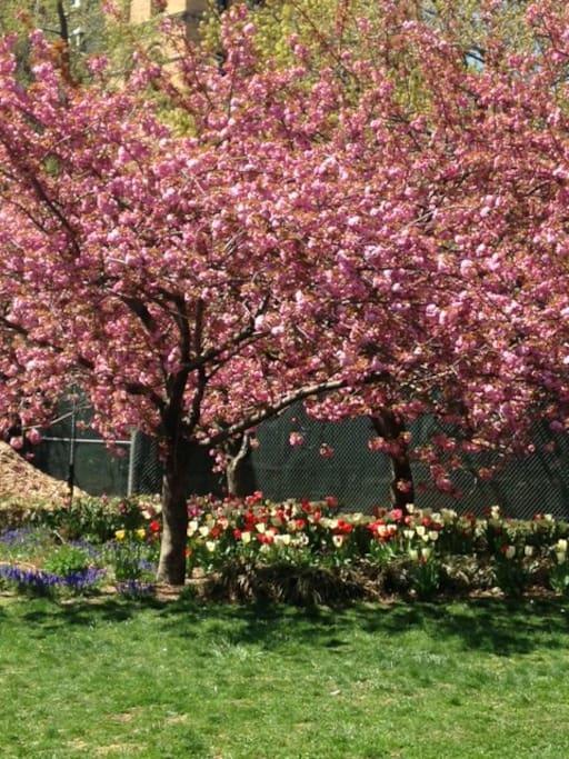 Washington Square Park in the Springtime!